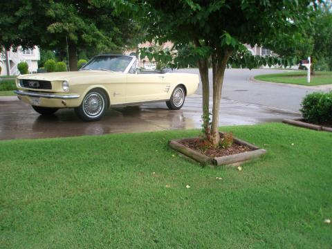 1966 Ford Mustang Convertible in Springtime Yellow